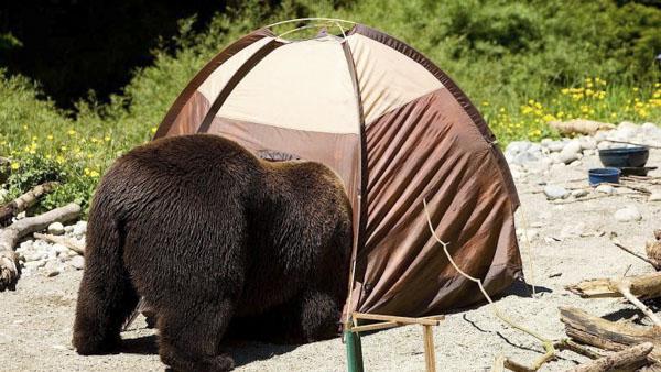 bear in tent